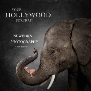Newborn Photography New York